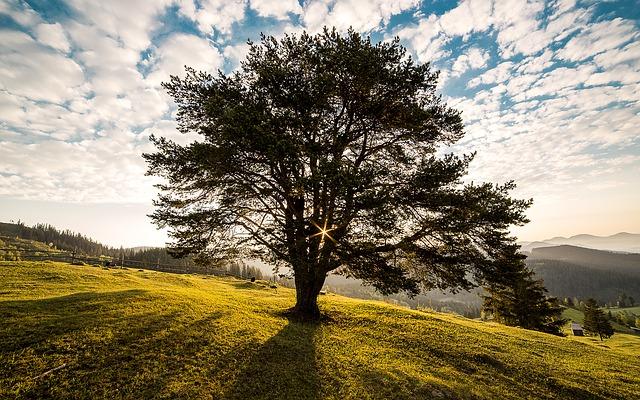 Alla behöver vi ett träd!