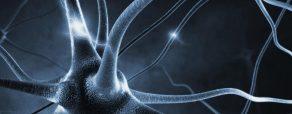 Interpersonell neurobiologi - den stora bilden (Block 1)