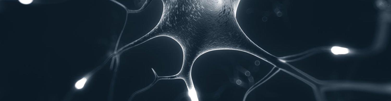 neuron_header