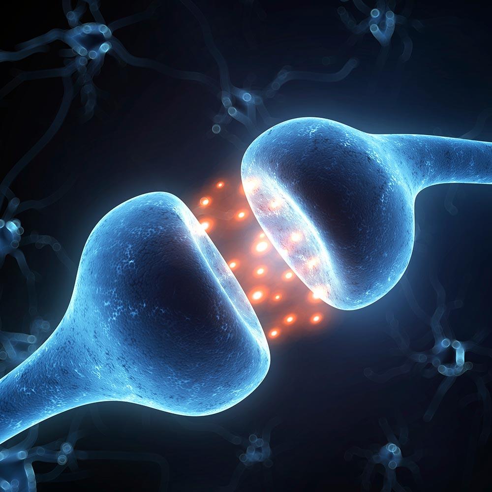 terapeuter_neurons