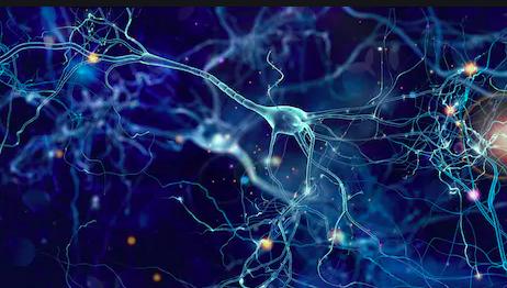 Interpersonell neurobiologi - detaljerna