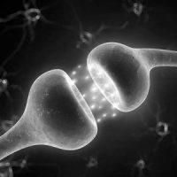 INTEGRERA NEUROBIOLOGI MED LIVET (INL)
