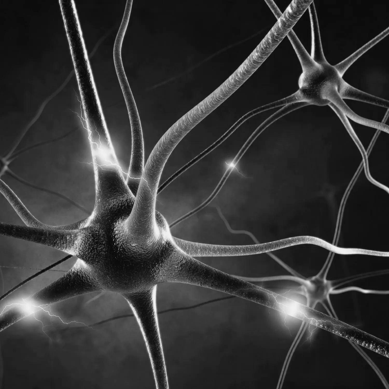 INTERPERSONELL NEUROBIOLOGI - DEN STORA BILDEN